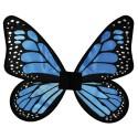 butterfly wings blue